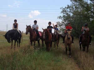 Нашите коне